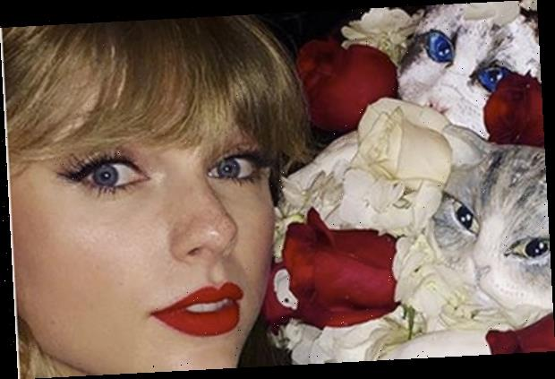 Sensational Taylor Swifts Birthday Cake Featured Her Three Cats Faces Funny Birthday Cards Online Alyptdamsfinfo